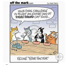 Off the Mark: Feline Fear Factor Cat Jokes, Funny Animal Memes, Funny Animal Pictures, Funny Cats, Funny Animals, Cat Humour, Animal Funnies, Crazy Cat Lady, Crazy Cats