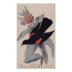 Red winged blackbird by John James Audubon Poster - flowers floral flower design unique style