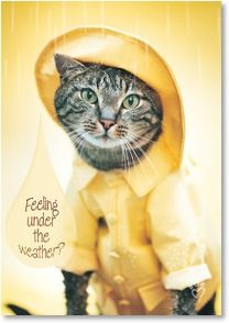 Feeling under the weather? - Rachael Hale