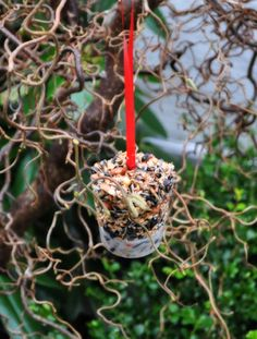 winter birdfeeder...melt crisco...stir in bird seeds, nuts, and or dried fruit...pour into paper cups with a ribbon...let set....tear off cups and hang outside for birds.