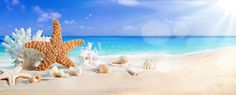 Picture of seashells on seashore in tropical beach summer holiday background stock photo, images and stock photography.