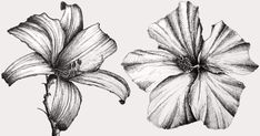 An easy step-by-step guide for drawing flowers with pens. Tips and techniques to draw your favorite flower with many examples using pen and ink. Flower Art Drawing, Flower Drawing Tutorials, Floral Drawing, Painting Tutorials, Outline Drawings, Pencil Art Drawings, Art Journal Techniques, Drawing Techniques, Learn To Draw Flowers