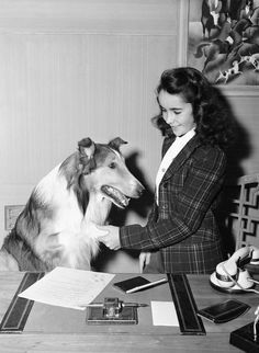 "1943  11 year-old Elizabeth & Lassie around the time of her performance in   ""Lassie Comes Home"""