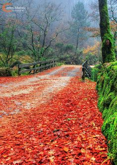 Parque nacional - Peneda enjoy portugal cottages and manor houses, rural tourism, great holidays