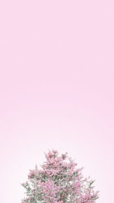 Pin by brenda ren on wallpaper nature iphone wallpaper, ipho Nature Iphone Wallpaper, Pink Wallpaper, Flower Wallpaper, Wallpaper Backgrounds, Iphone Backgrounds, Wallpaper Ideas, Wallpaper Powerpoint, Background Powerpoint, Aesthetic Backgrounds