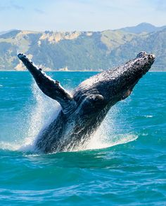The best #performances are impromptu. #Whale #WhaleWatching