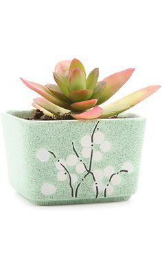 T4U 3.5 Inch Ceramic Japanese Stlye Square Wintersweet succulent Plant Pot/Cactus Plant Pot Flower Pot/Container/Planter Green Best Price