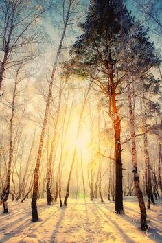 Dégustez le moment le plus agréable de la journée : juste avant le lever du soleil. Le plaisir à l'état pur.  Paul Wilson.