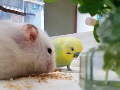 Training Your Pet Parrot Budgie Parakeet, Budgies, Parrots, Parrot Food Recipe, Little Critter, Cute Birds, Beautiful Birds, Cute Pictures, Healthy