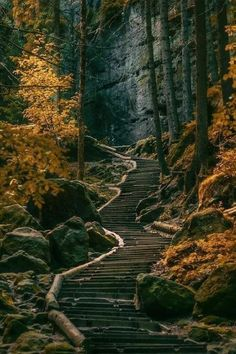 Immagine di nature, forest, and fall