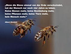 Bienen.Die fleißigsten aller Tiere, die verlässlich von Blüte zu Blüte fliegen, verschwinden langsam.Ein Sterben, das weltweit mit Sorge beobachtet wird.