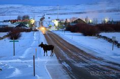 "jasonsavagephoto: ""Morning commute in Jackson, Montana. Montana Winter, Montana Homes, Yellowstone Park, Sea To Shining Sea, Big Sky Country, Photos Voyages, Hiking Trails, Rocky Mountains, Wyoming"