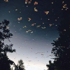 Reverse reflection.  #instagram #vscocam #autumn #nature #beauty #hope #lake #reflection