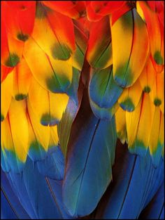 Macaw Feathers by Ruthanne Annaloro on Parrot Feather, Feather Art, Bird Feathers, Parrot Wings, Coloured Feathers, Beautiful Birds, Beautiful Images, World Of Color, Over The Rainbow