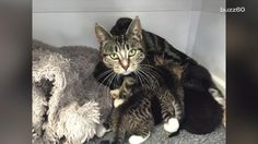A New Zealand vet clinic realized the cat that kept lurking outside and trying to sneak into the office wasn't just looking for a treat or a cuddle, she was trying to get to her kittens that had been abandoned there.