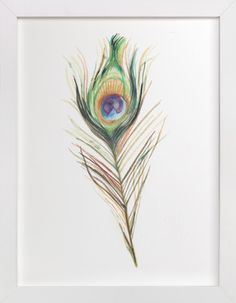 Peacock Feather by Amanda Paulson at minted.com