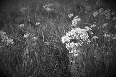 DSC_0243 (2) on Flickr.