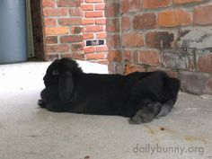 Concrete always feels nice and cool on a bunny's belly - December 6, 2017