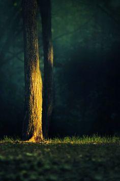 Beautiful fall light