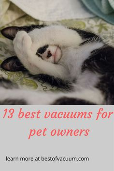 Want the best vacuum for handling pet hair? We've compiled a list of top-rated models in the market right now. Vacuum Cleaners, Pet Shipping, Moving Across Country, Pet Transport, Best Vacuum, All I Ever Wanted, Old Cats, A Whole New World