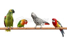 Colors Of Nature - Stock Photo - iStock