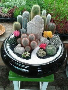 27 beauty cactus and succulent garden ideas for indoorCreating a mini cactus garden. Trend: creating experience and being able to enjoy the material as well. Also terrarium sceneBeautiful Succulent Arrangement for a natural focal point.Colored sand n