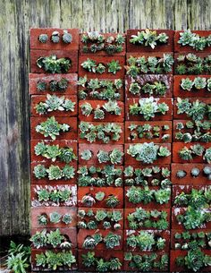 Succulents planted in the holes of bricks create a striking green wall. Love this idea!
