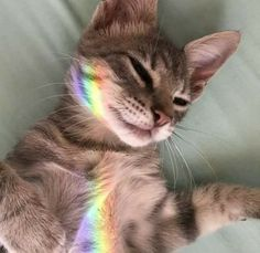 Quotes About Photography, Wedding Photography, Funny Animal Pictures, Funny Animals, National Cat Day, October 29, Cat Gif, Pic Shot, Rainbow