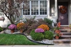 home-curb-appeal-photo-photos-fall-autumn-chrysanthemums-landscape