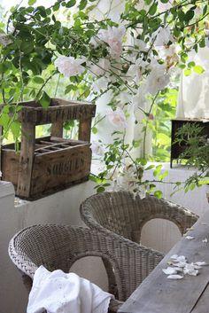 rose garden dining