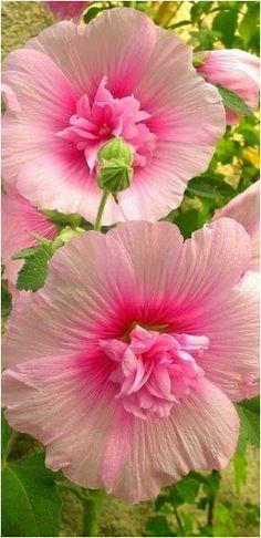 Tabiat doğa çiçek