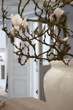 Magnolia branch
