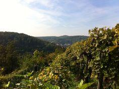 Weinwanderweg #Stuttgart