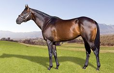 Jay Peg - Freemanstallions - Present and Future Champion Sires