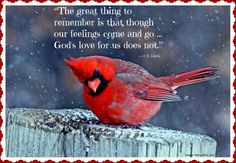 Isaiah thank you dad I did ask you for a picture of a cardinal today so I know your with me. Thank you love you DAD. Quotes Flying, Bible Scriptures, Bible Quotes, Healing Scriptures, Scripture Verses, Jesus Quotes, Lyric Quotes, Isaiah 46 4, Psalm 46