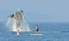 These Paddle Boarders May Be Luckier Than The Powerball Winners