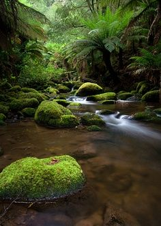 I have a thing for moss -- Rainforest Tasmania What A Wonderful World, Beautiful World, Beautiful Places, Landscape Photography, Nature Photography, Belleza Natural, Australia Travel, Nature Photos, Wonders Of The World