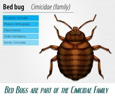http://BedBugTrick.com Get bed bug home treatment tricks to treat bed bugs.