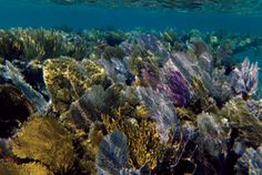 Snorkeling in Cuba (Full Article) | Saltwater & Reef | Feature Articles | TFH Magazine®