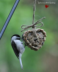 Rebecca's Bird Gardens Blog: DIY Heart Bird-Feeders ♥