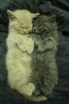 Napping kittens.....OFF the charts adorable!  <3