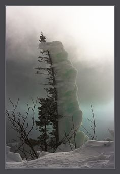 Winter Scenery --- Snow Piling Up on One Side of the Tree ---Photo credit: Sergey Andreev All Nature, Amazing Nature, Science Nature, Images Lindas, Beautiful World, Beautiful Places, Cool Pictures, Beautiful Pictures, Funny Pictures