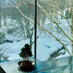 #motherearth #nature #peace #zen #lakeside #zaborinryokan #niseko #hokkaido #simpleisbest #plant #minimalism #winter #namasté photo credit: @celine.seize | zaborin.com