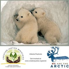 God's creatures in the #ArcticRefuge need our help! Protect their home. www.creationjustice.org/arctic #WeAreTheArctic
