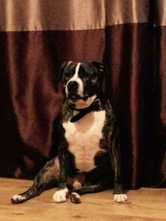 Marley is a wonderful family dog who was taken into rescue due to his owner becoming poorly. He didmt do well in kennels so a fabulous family took him into short term foster care. This has come to an end and Marleys original owner isnt able to care for him. Unless Marley goes into foster again or gets adopted theres a good possibility he will become depressed in kennels as he thrjves on human contact.