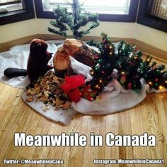 Funny pictures about Christmas In Canada Is Difficult Sometimes. Oh, and cool pics about Christmas In Canada Is Difficult Sometimes. Also, Christmas In Canada Is Difficult Sometimes photos. Canadian Christmas, Merry Christmas To All, Christmas Humor, Christmas Trees, Xmas Tree, Christmas Things, Christmas 2015, Christmas Pictures, White Christmas