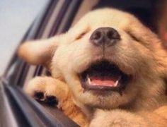 O siteProcura-se Cachorrofoi criado para auxiliar na busca de cachorros e outros animais perdidos em todo país. A ferramenta, construída a partir do sistema de mapas e localização do Google, cadastra os animais perdidos e encontrados, cruza informações e envia alertas que possam ajudar na busca dos usuários. Leia a matéria na íntegra
