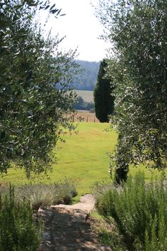 tuscany view through olive trees
