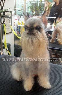 โรงเรียนสอนตัดขนสุนัข ตัดแต่งขนสุนัข อาบน้ำ สอนตัดขนสุนัข creative dog grooming school in Thailand...... สอน,เรียนตัดขนสุนัข โรงเรียนภายใต้การควบคุมของกระทรวงศึกษาธิการ