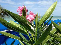 #doubletreebeachresort #beach Beach Resorts, Plants, Resorts, Plant, Planting, Planets